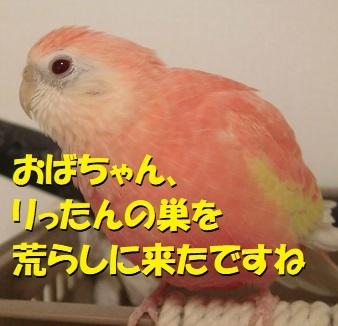 CIMG0383.jpg