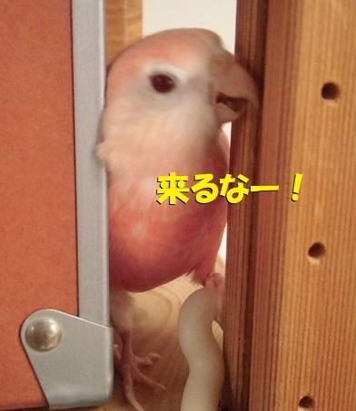 CIMG0395.jpg