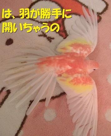 CIMG9674.jpg