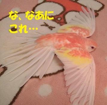 CIMG9675.jpg