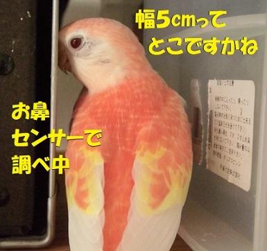 CIMG9748.jpg