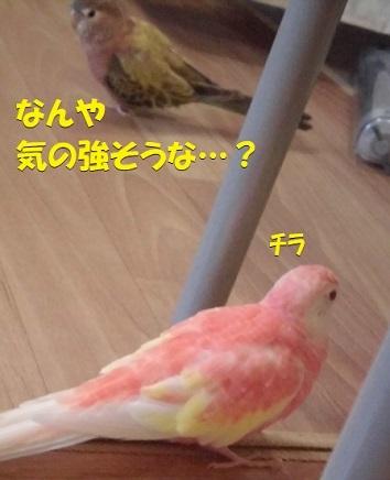 CIMG9811.jpg