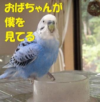 CIMG9825.jpg