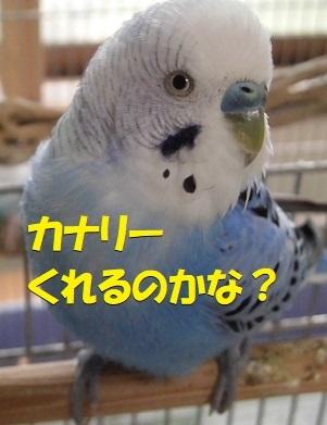 CIMG9854.jpg