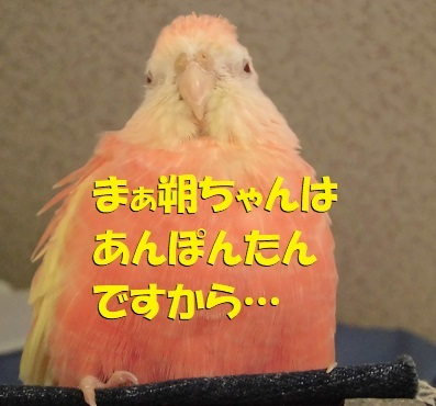 CIMG9976.jpg