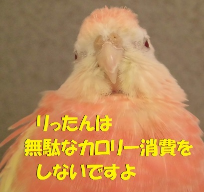 CIMG9978.jpg