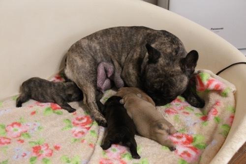 モナ 8育児 子犬 1