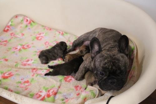 モナ 8育児 子犬 4