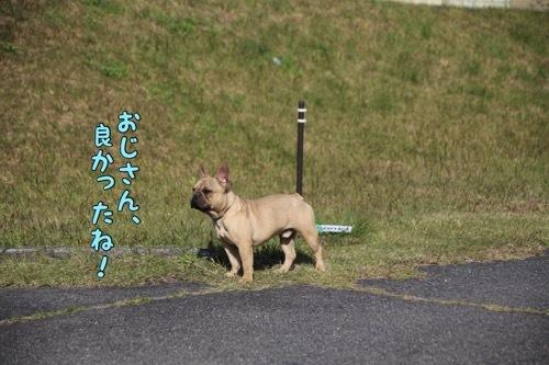 きん散歩 カワセミ 激写 2