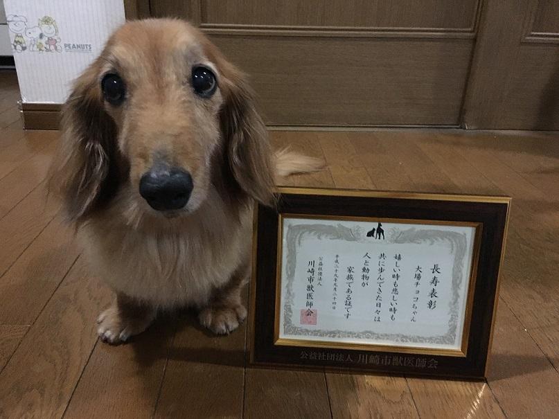 ちょこ 長寿表彰3