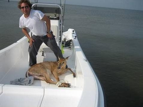 船上で鹿に遭遇する