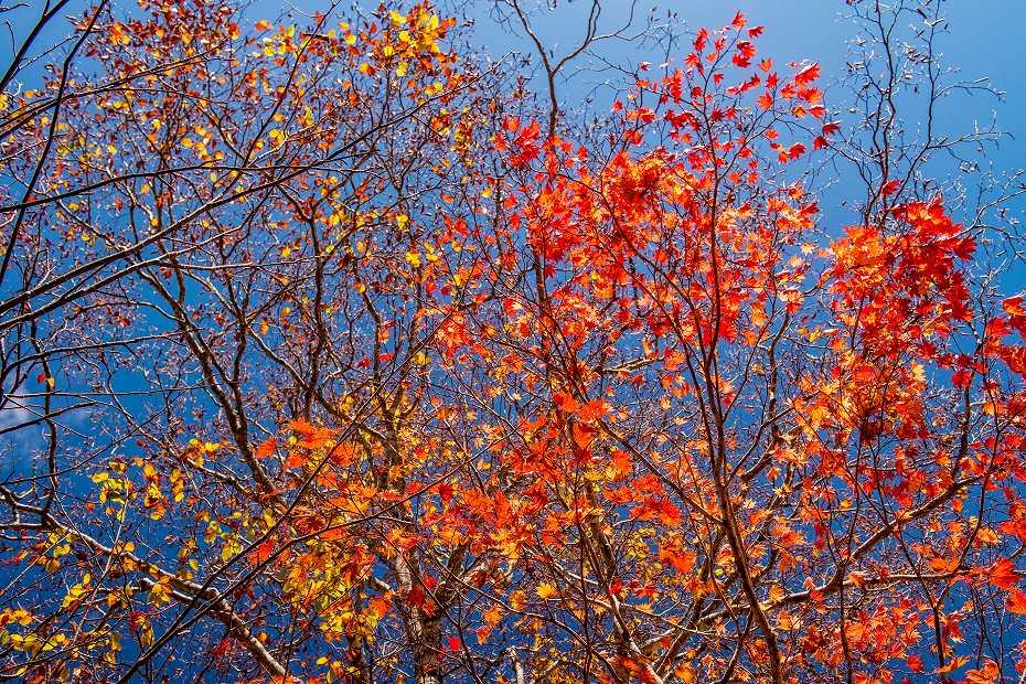 2017.10.17籾糠山.15