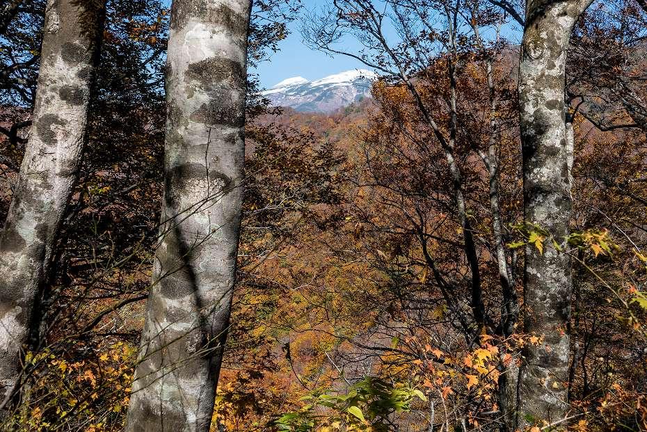 2017.10.26三ノ峰登山口~杉峠_24