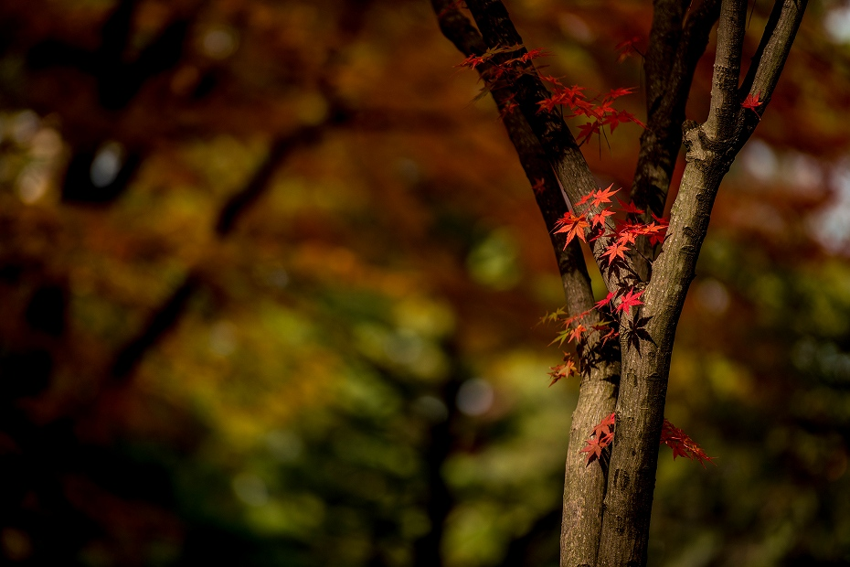 2017.11.17.兼六園の紅葉.16