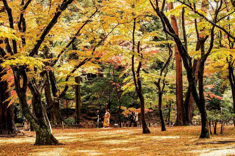 2017.11.17.兼六園の紅葉.15