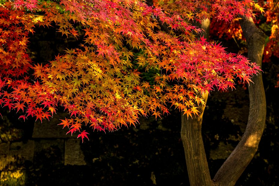 2017.11.21 金沢城の紅葉_7