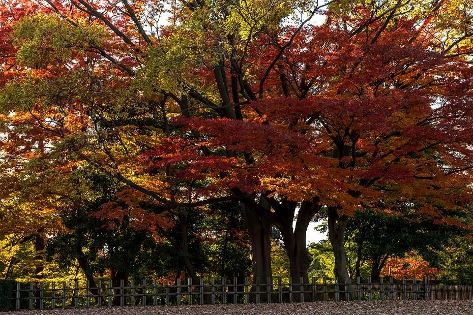 2017.11.21 金沢城の紅葉_3