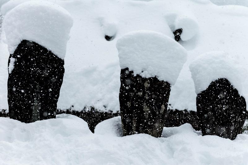 2017.12.13白川郷 降り続く雪 9