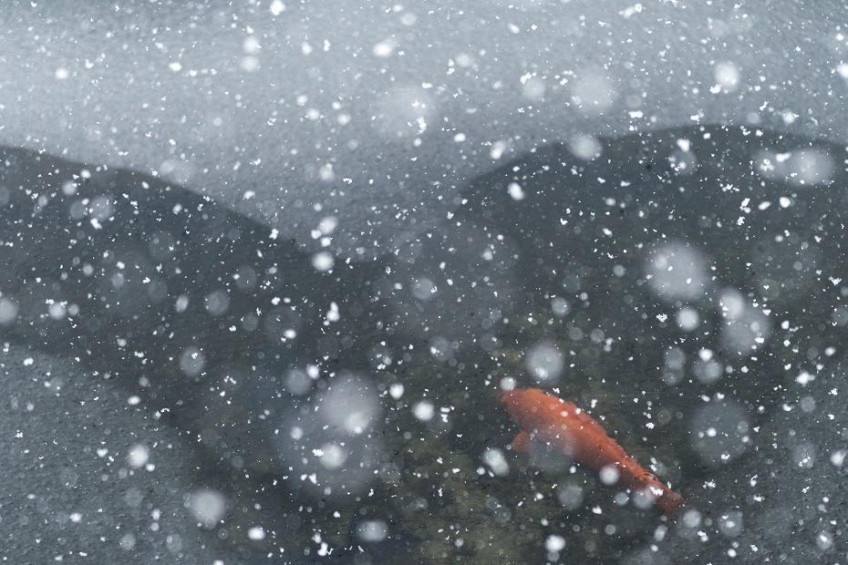2017.12.13白川郷 降り続く雪 5