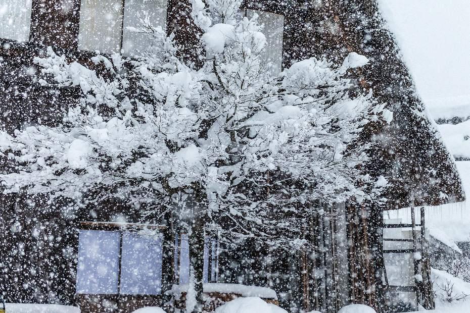 2017.12.13 白川郷の雪景色 14