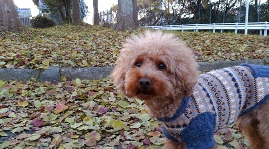 落ち葉の散歩大好き