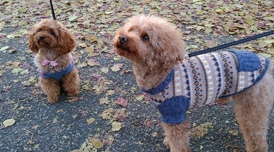 そろってセーター姿だ