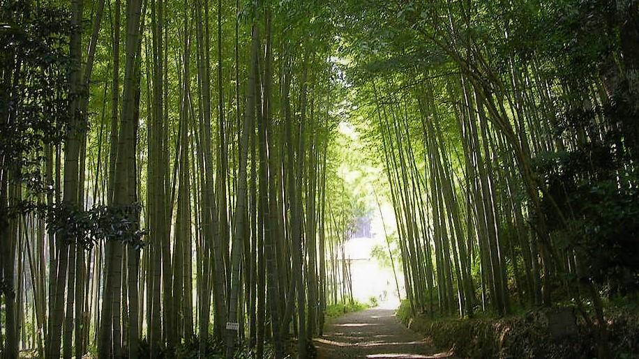 竹のアーケード