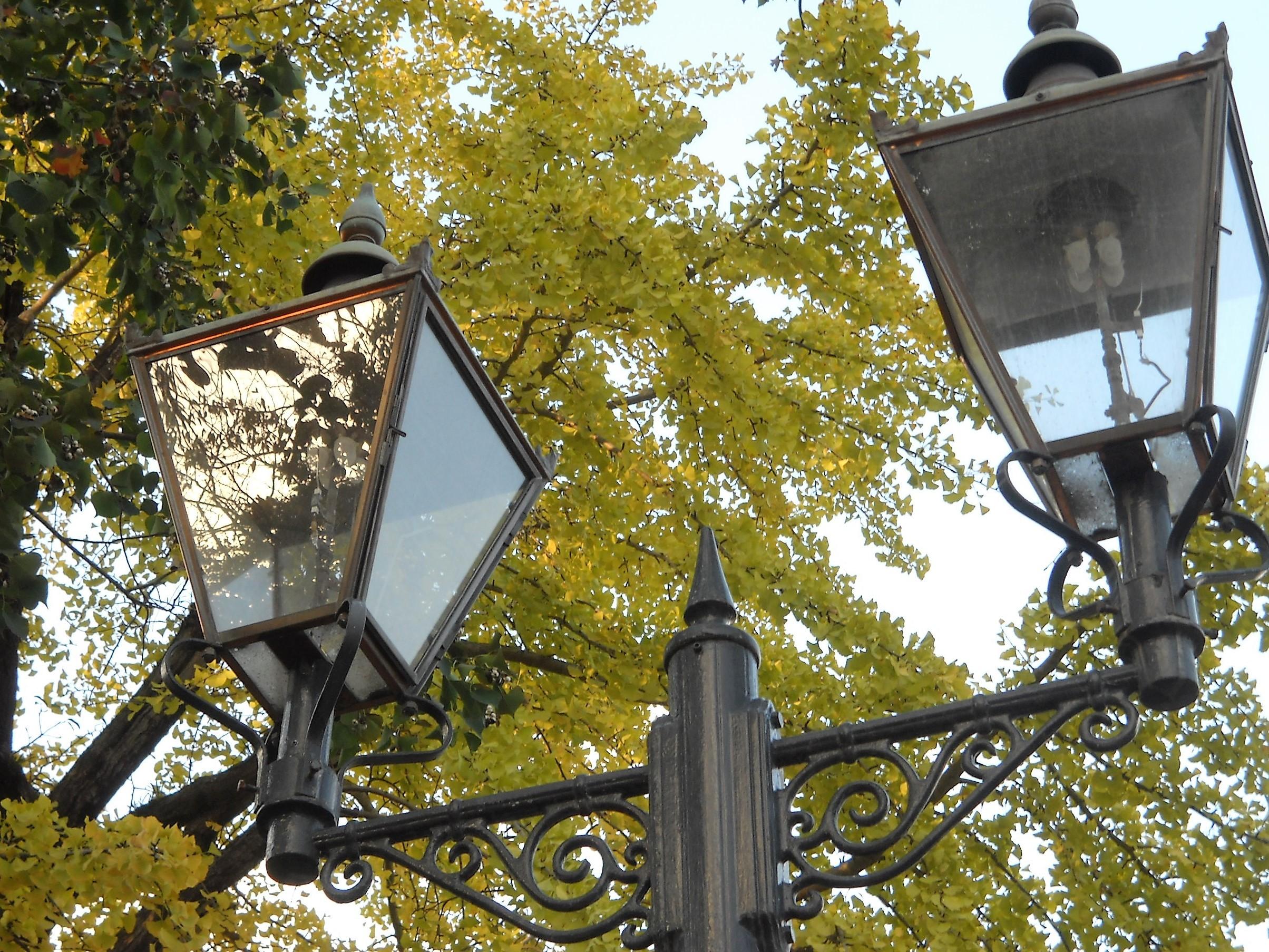 街燈と黄葉