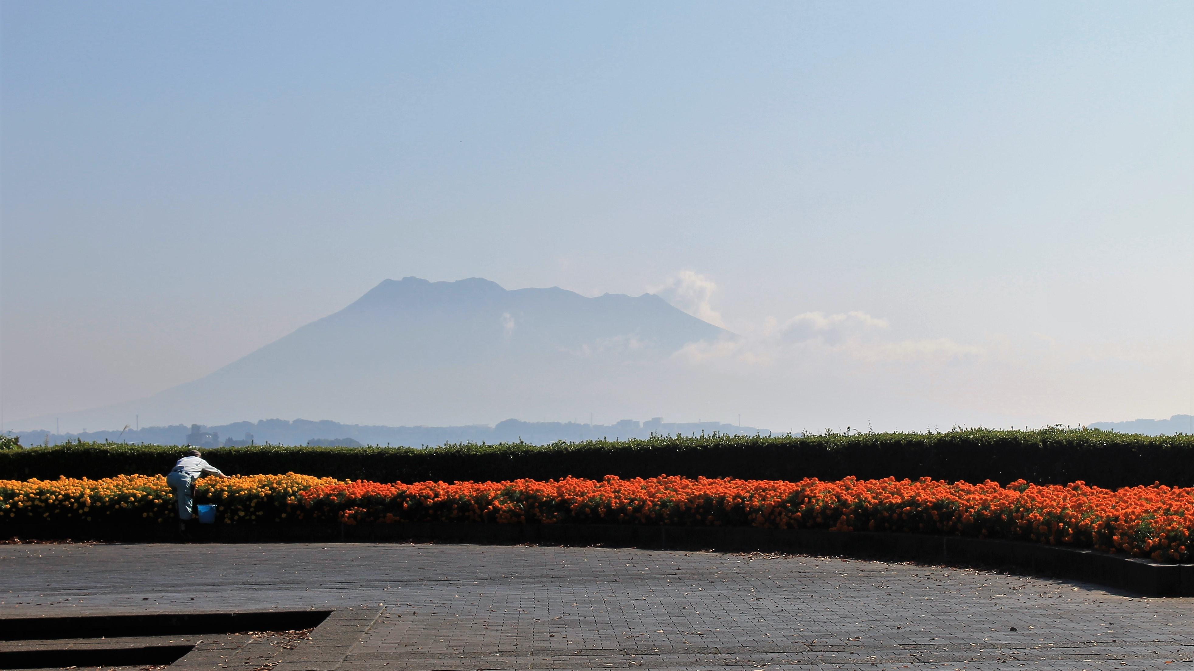 花壇と桜島