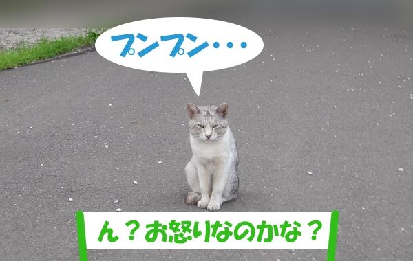 プンプン・・・ 「ん?お怒りなのかな?」