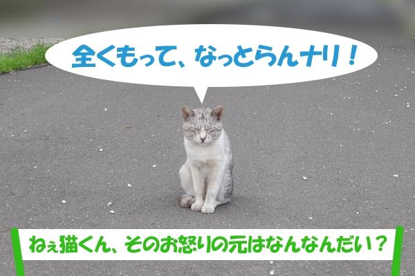 全くもって、なっとらんナリ!「ねぇ猫くん、そのお怒りの元はなんなんだい?」