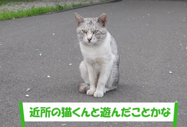 「近所の猫くんと遊んだことかな」