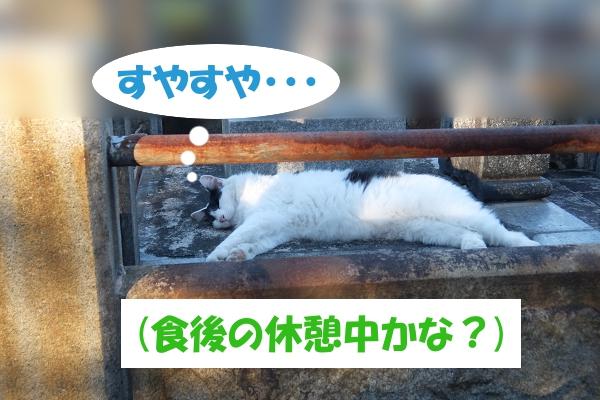 すやすや・・・    (食後の休憩中かな?)