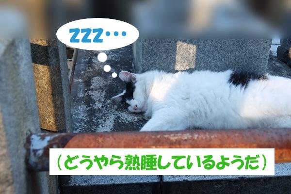 zzz…  (どうやら熟睡しているようだ)