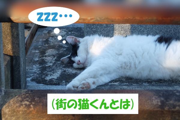 zzz…   (街の猫くんとは)