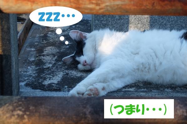 zzz…    (つまり・・・)