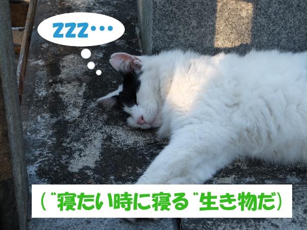 """zzz…   (""""寝たい時に寝る""""生き物だ)"""