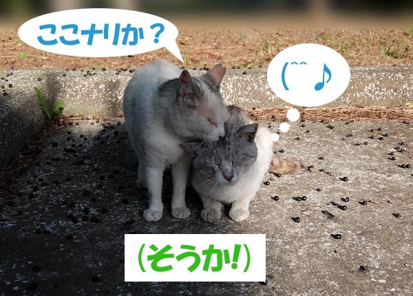 ここナリか? (^^♪ (そうか!)