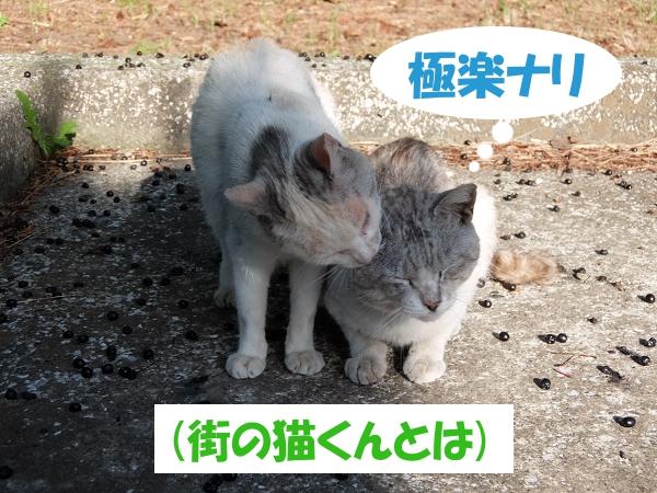 極楽ナリ (街の猫くんとは)