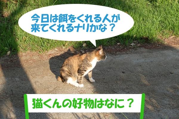 今日は餌をくれる人が来てくれるナリかな?「猫くんの好物はなんだい?」