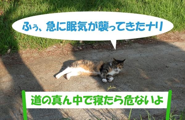 ふぅ、急に眠気が襲ってきたナリ「道の真ん中で寝たら危ないよ」