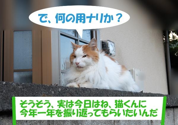 で、何の用ナリか? 「そうそう、実は今日はね、猫くんに今年一年を振り返ってもらいたいんだ」