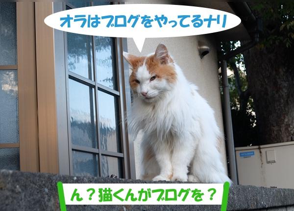 オラはブログをやってるナリ 「ん?猫くんがブログを?」