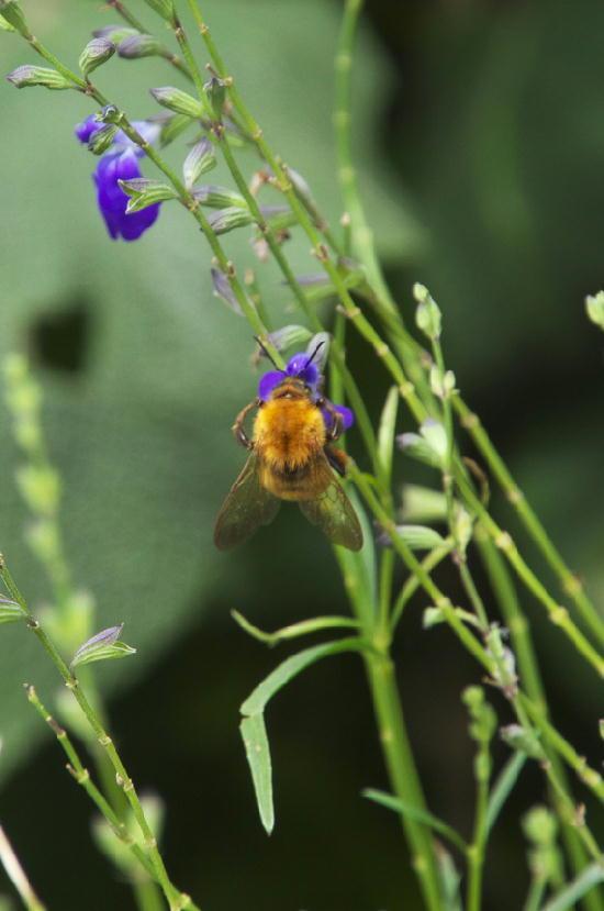 蜂-789