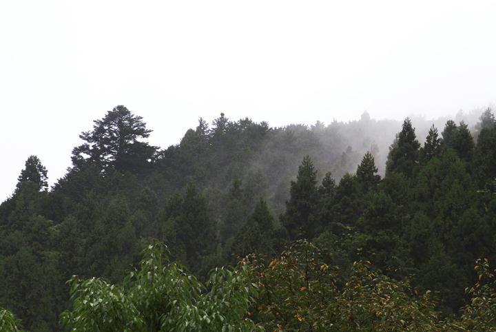 雨上がり-067