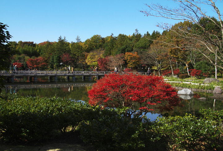 日本庭園-266