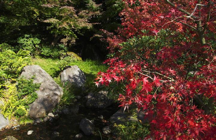 日本庭園-276