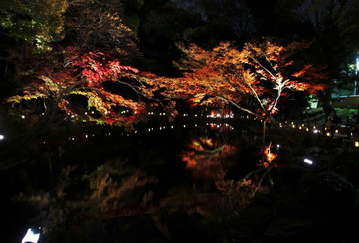 細川邸のライトアップ-698-11