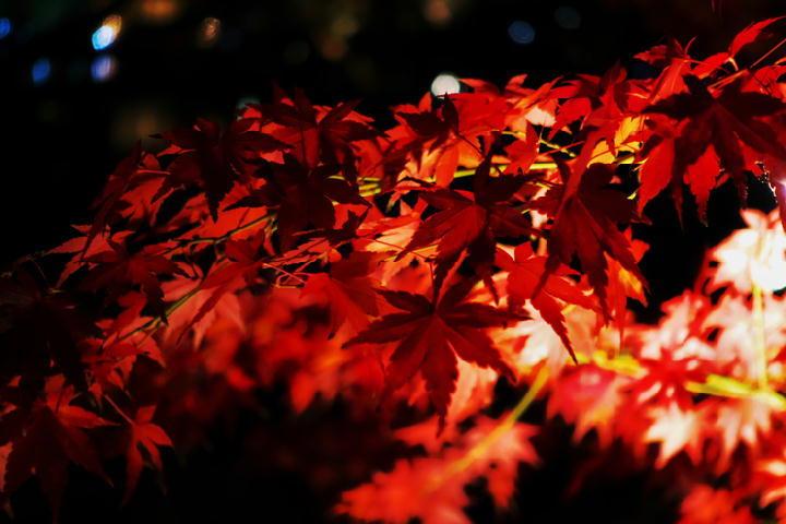 細川邸のライトアップ-705-11