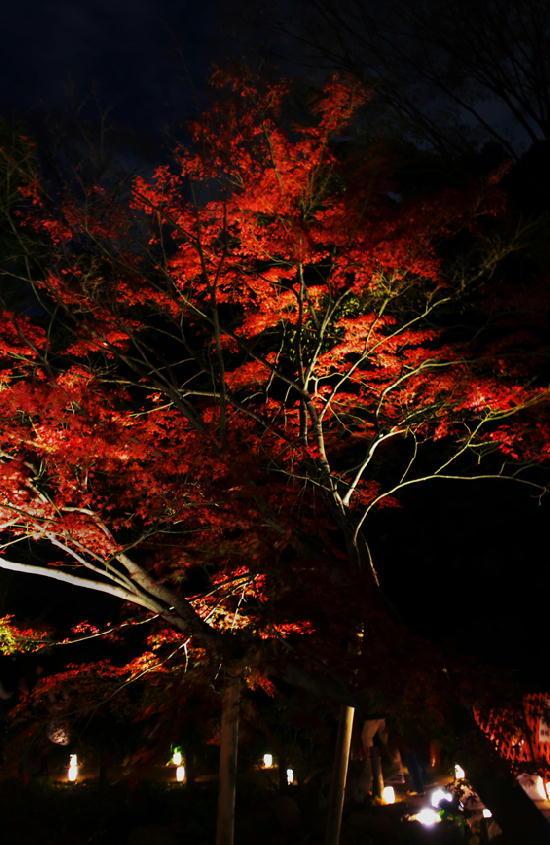 細川邸のライトアップ-707-11
